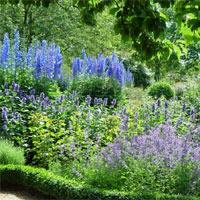 Der Reiz des naturnah gestalteten Gartens: Wie in der freien Natur wächst hier eine Fülle an Stauden und Gehölzen. - Foto: BGL