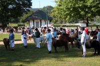 Beim Bad Harzburger Shetland-Pony-Festival sind die Kleinen ganz groß. - Foto: djd/Stadtmarketing Bad Harzburg