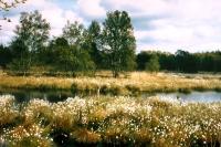 Das Ahlenmoor, Niedersachsens größtes Hochmoor, prägt die einzigartige Landschaft rund um Bad Bederkesa. - Foto: djd/Tourismus, Kur und Freizeit GmbH Bederkesa