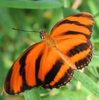 Ab September 2013 wird die botanika wieder zum Reich der Schmetterlinge. - Foto: djd/botanika Das Grüne Science Center