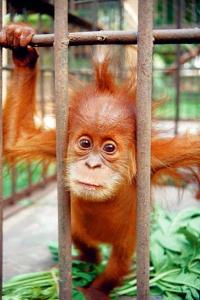 Der Kauf falscher Souvenirs kann zum Aussterben von Tier- und Planzenarten führen. Lebende Wildtiere sollte man generell nicht mitbringen, auch wenn sie einem leidtun. - Foto: djd/WWF Deutschland/C.R. Shepherd Traffic SE Asia