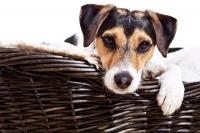 Auch der vierbeinige Hausgenosse kann einmal krank werden. Vieles kann der Besitzer selbst behandeln - geht es dem Tier allerdings wirklich schlecht, gehört er zum Tierarzt. - Foto: djd/Schecker/fotolia.com