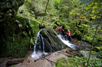 Österreichs Wanderdörfer bieten Wanderern elementare Naturerlebnisse, zum Beispiel das Wildwandern im Wanderdorf Soboth. - Foto: djd/Österreichs Wanderdörfer e.V./Tom Lamm
