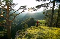 Der Wiener Alpenbogen ist eine der schönsten österreichischen Weitwanderrouten. - Foto: djd/Österreichs Wanderdörfer e.V./Franz Zwickl
