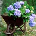 Blütenzauber für Kübel und Beet