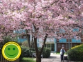 AllgäuStift - Seniorenzentrum Marienheim in Kempten bekam den «grünen Smiley»