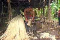 Aus der Faserbanane Abacá kann Filterpapier hergestellt werden: Mit der Rainforest-Alliance-Zertifizierung wurden die Weichen für eine umweltverträgliche Ernte und Weiterbearbeitung der Fasern gestellt.  Foto: djd   Rainforest Alliance