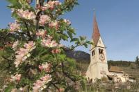 Die Obst- und Weinbaugemeinde bietet im Frühjahr sehr viele touristische Angebote an. Foto: Tourismusverein Algund | spp-o