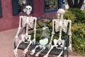 Wie viele Knochen hat eigentlich der Mensch?