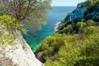 Am Königsstuhl konkurriert das Grün der Bäume mit dem blau-grün schillernden Wasser der Ostsee.  Foto: djd | Nationalpark-Zentrum KÖNIGSSTUHL/NZK-Lehmann