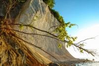 Intensives Farbenspiel: frisches Blattgrün vor den weißen Kreidefelsen auf Rügen.  Foto: djd | Nationalpark-Zentrum KÖNIGSSTUHL/NZK-Lehmann