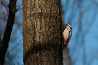 Ein Geheimtipp für Hobby- und Naturfotografen: In der Senne bekommen sie seltene Vogel- und Pflanzenarten vor die Linse. Foto: djd | Teutoburgerwald Tourismus/SHS