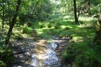 Die nächste Quelle ist meist nicht weit entfernt: Die eigentlich trockene Sennelandschaft ähnelt bisweilen einem Urwald.   Foto: djd | Teutoburgerwald Tourismus/SHS