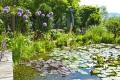 Der Gartenteich - Spannend wie ein Aquarium