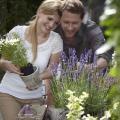 Das Flair Südfrankreichs: Lavendel im heimischen Garten
