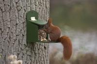 Fertiges, im Nährstoffgehalt ausgewogenes Mischfutter versorgt Eichhörnchen im Winter ideal.  Foto: Welzhofer | Hecker