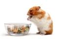 Hamster sind keine Vegetarier