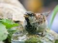 Ob Sommer oder Winter: Gartenvögel brauchen Wasser