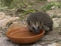 Stachelritter – Nützliche Sympathieträger im Garten