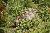 Im Herbst werden die in Freilandanlagen lebenden Schildkröten ins Zimmerterrarium geholt. Foto: FLH