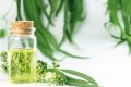 Mit Eucalyptusöl gesund durch den Winter