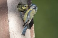 Gerade im Frühjahr und Sommer brauchen Vögel im Garten Ruhe für ihre Aktivitäten wie Nestbau und Brutpflege. Foto: Welzhofer/Hecker