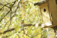 Es gibt viele Möglichkeiten, Gärten durch vogelfreundliche Bepflanzungen und Gestaltungen in Brut- und Lebensraum für die gefiederten Freunde zu verwandeln. Foto: Welzhofer