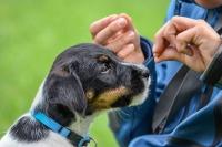 Hunde können bis zu 250 Worte lernen - und verstehen zudem die Gesten ihres Besitzers. Foto: djd | Agila/K. Thalhofer - Fotolia