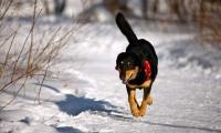 Spaziergänge mit dem Hund sollten bei Kälte kürzer ausfallen - dafür lieber einmal öfter raus gehen. Foto: Deutscher Tierschutzbund e.V.