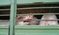 Deutscher Tierschutzbund bewertet Koalitionsvertrag