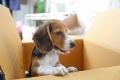 Auch Hunde sind Gewohnheitstiere