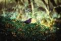 Eine Hecke für Vögel