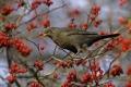 Ein Garten für Vögel - mit den schönsten Vogelsträuchern