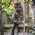 Tipps für den bestmöglichen Schutz Ihrer Katze