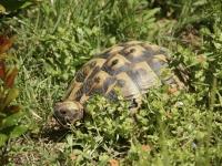 Für die artgerechte Haltung von Landschildkröten ist eine naturnah angelegte Freilandanlage ideal. Foto: FLH