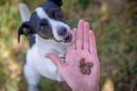 Kleine, softe Häppchen sind fürs Training und Spazierengehen besonders geeignet. Auch Welpen und Junghunde können sie mühelos kauen. Foto: djd/Christopherus