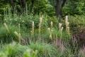 Die standortgerechte Pflanzenwahl führt zu geringem Pflegeaufwand