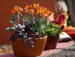 Winter ade! Frühlingsblüher wie diese orangefarbene Tulpen aktivieren die Lebensgeister nach den dunklen Wintertagen und machen gute Laune. - Fotos: CMA